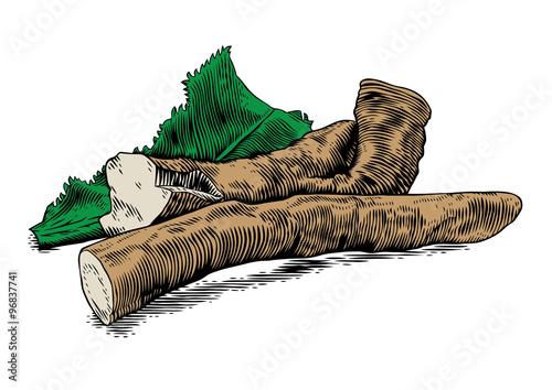 Canvas-taulu Root of horseradish