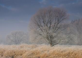 Panel Szklany Zima zimowe drzewa