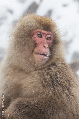 In de dag 雪山のおさるさん Monkey of the wild expression