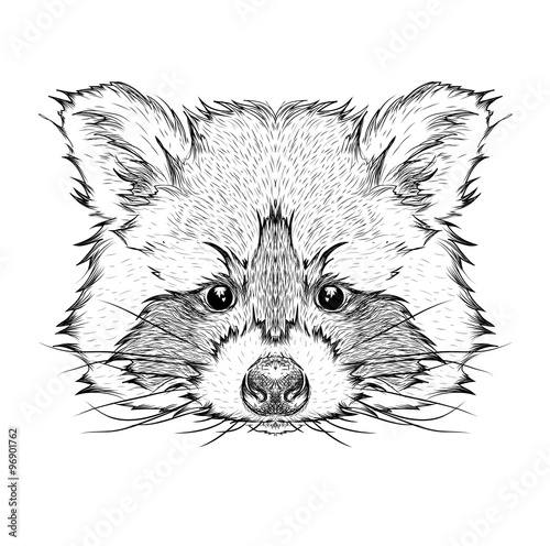 Photo sur Toile Croquis dessinés à la main des animaux Hand draw raccoon portrait. Hand draw vector illustration