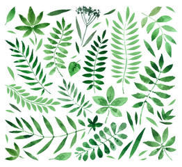Fototapeta Popularne collection painted watercolors of plants and leaves. vector illustration