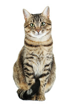 Beautiful Cat Isolated On A Wh...