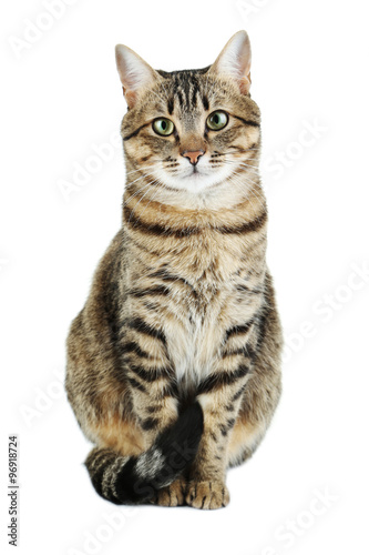 Canvas Print Beautiful cat isolated on a white