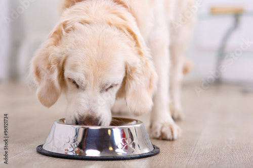 Fotografia Nice dog eating