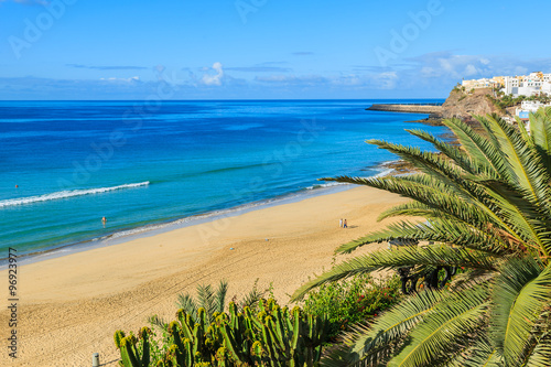 Foto op Plexiglas Canarische Eilanden Palm tree on beach in Morro Jable holiday village, Fuerteventura, Canary Islands, Spain