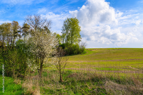 Green field in rural landscape of Poland on sunny spring day, Swietokrzyskie voivodship, Poland