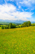 Spring flowers on green meadow with mountains view, Lapszanka, Tatry Mountains
