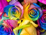 Fototapeta Tęcza - Rainbow roses close-up