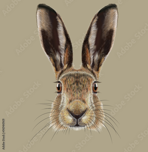 Valokuvatapetti Illustrated Portrait of Hare
