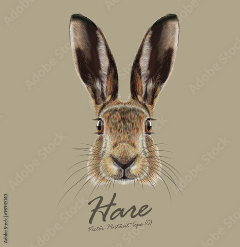 Fotomural Hare or Rabbit wild animal cute face