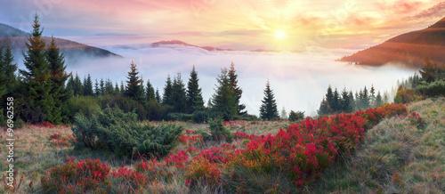 Golden colors of autumn #96962558