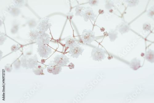 biale-kwiaty-na-jasnym-tle