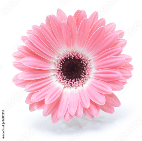 Foto op Plexiglas Gerbera gerbera flower isolated