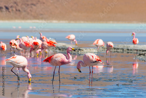Fotobehang Flamingo Pink flamingos at