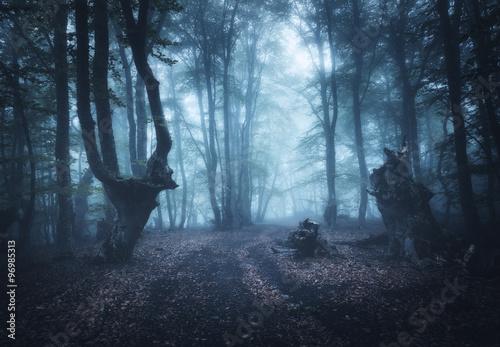 Keuken foto achterwand Bestsellers Dark autumn forest in fog. Beautiful natural landscape.