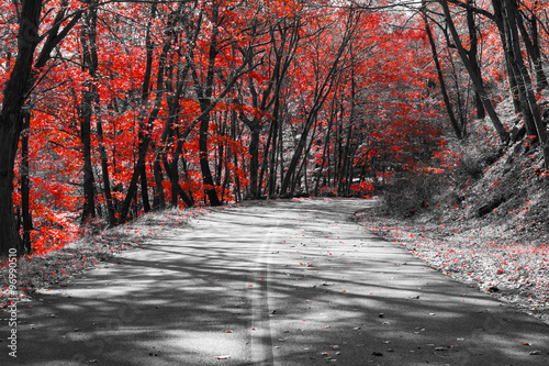 фотография Empty Highway Through Red Forest in Black and White Landscape