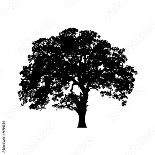 Photo Beautiful vector tree illustration silhouette icon for websites