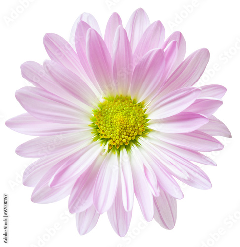 In de dag Madeliefjes Daisy Flower Pink White Daisies Floral Flowers Isolated