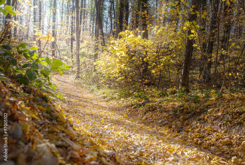Tuinposter Weg in bos autumn forest in morning