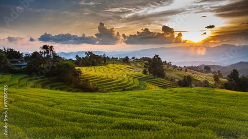 Garden Poster Rice fields Rice terraces
