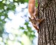 curious squirrel in the autumn park