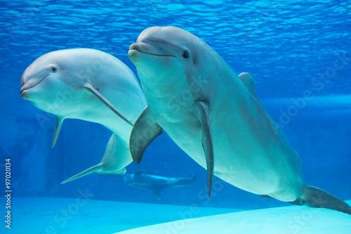 Poster de jardin Dauphin Dolphin
