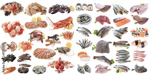Photo  seafood fishs and shellfish