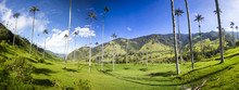 Cocora Valley With Giant Wax P...