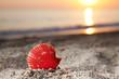 Seashell on sea sand beach