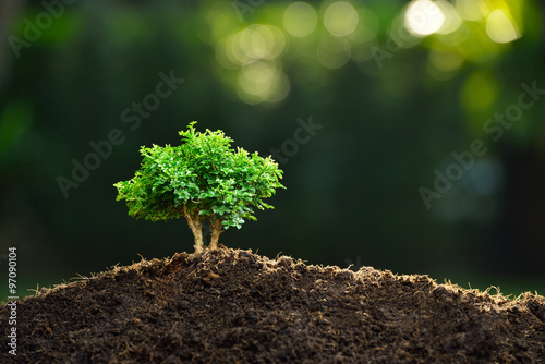 Spoed Foto op Canvas Bonsai Small plant in the morning light on nature background (bonsai tree)