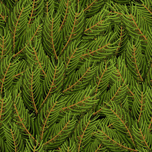 Spruce Branch Background. FIR Branch Seamless Pattern.  Christma