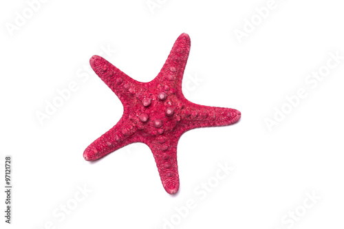 Red starfish isolated