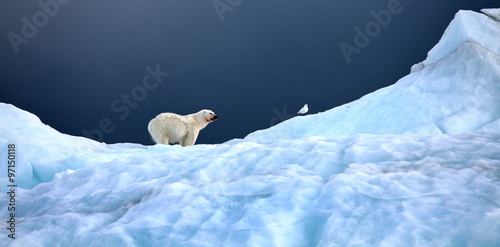 Fotobehang Ijsbeer Polar bear and ivory gull in natural environment