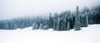 Leinwandbild Motiv Winter white forest with snow, Christmas background