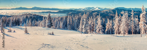 Panorama on the sunny winter morning in the Carpathian mountains #97171598