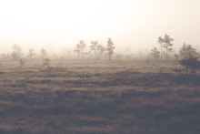 A Mystical Pine Forest On A Cold Morning. Image Taken On A Big Swamp During Early November In Finland. The Fog And Frost Is Covering Up The Whole Forest. Image Has A Vintage Effect Applied.