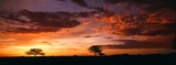 Fototapeta Sawanna - sunset