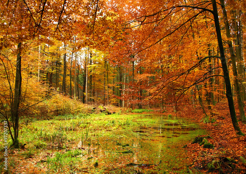 Deurstickers Herfst colorful autumn forest