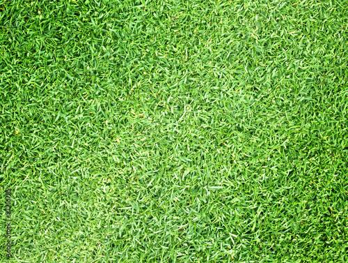 Foto op Plexiglas Groene Golf Courses green lawn natural