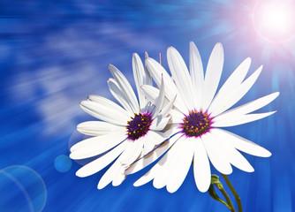 flores blancas bajo el sol