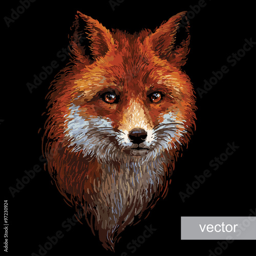 colored-fox-illustration-on-white