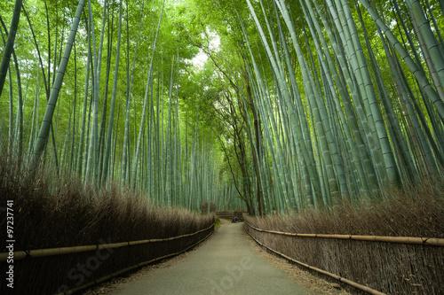 Foto op Plexiglas Bamboe Bamboo forest path, Kyoto, Japan