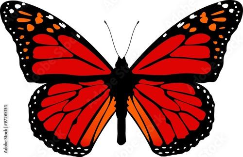 butterfly #97265134