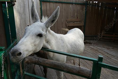Photo  donkey,