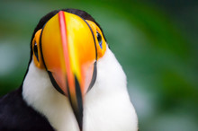 In Iguazu You Can See Toucans ...