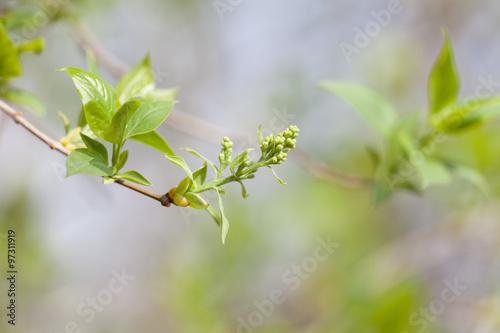 Fototapety, obrazy: Spring blossoms