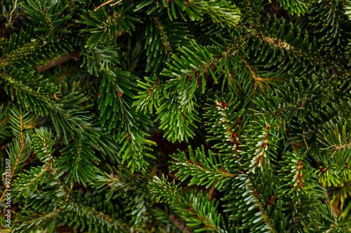 Fotografía Pine branches