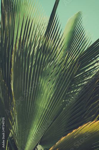 Fotografija  Abstrac, retro toned etxotic background.