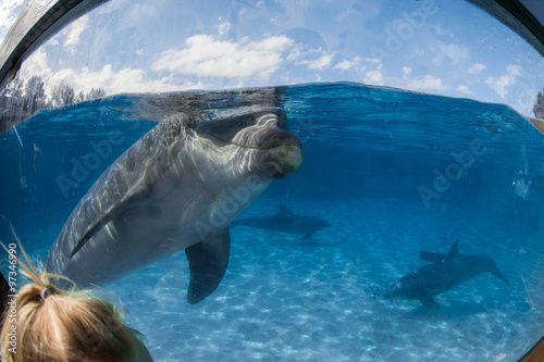 Poster Tortue dolphin portrait looking at you from aquarium