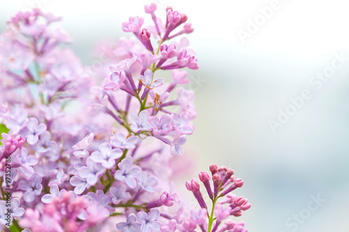 Foto op Plexiglas Lilac Beautiful flowers